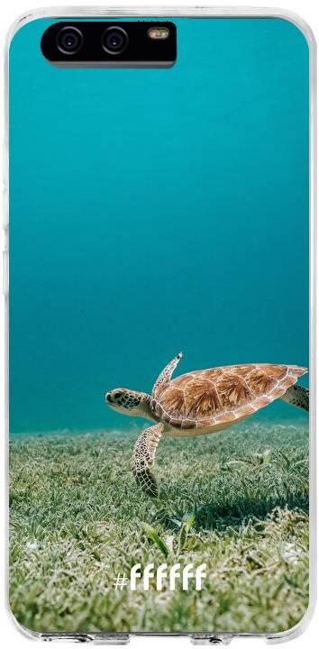 Turtle P10