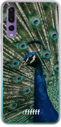 Peacock P30