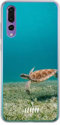 Turtle P30