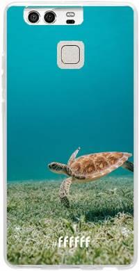 Turtle P9