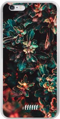 Ornament iPhone 6 Plus