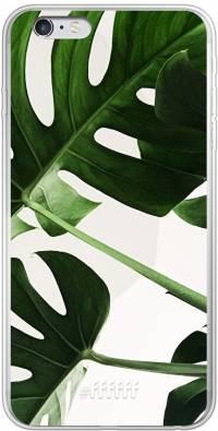 Tropical Plants iPhone 6 Plus