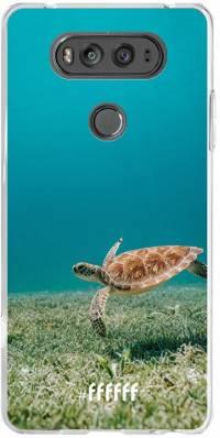 Turtle V20